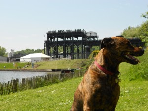Dave the Dog at the Anderton Boatlift